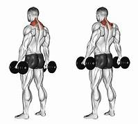 Standing Shrug -Back Neck Workout Guide
