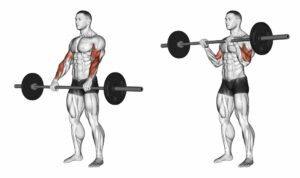 Reverse Barbell Curl Standing-Forearm Exercise Guide