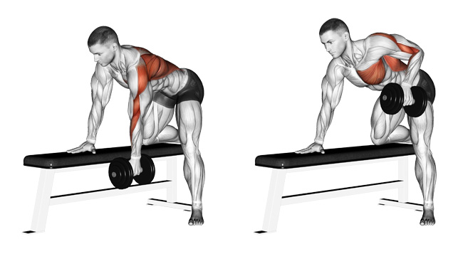 One Arm Dumbbell Row-Back Exercise Guide