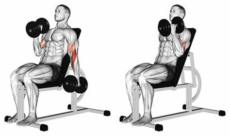 How To Do An Incline Dumbbell Curl.