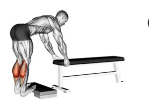 Donkey Calf Raise-How To Do Donkey Calf Raise For Soleus And Gastronomius Muscle