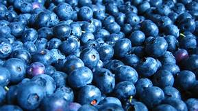 Blueberries-Best 12 Smoothie Ingredients Great To Boost Muscle