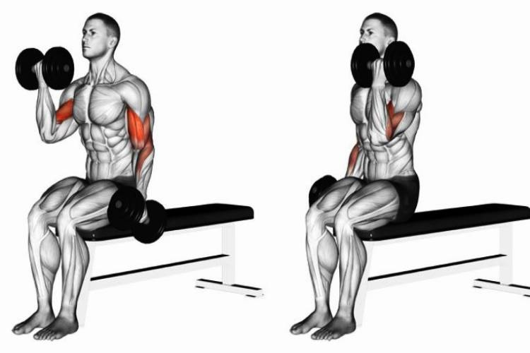 Seated Alternate Dumbbell Curl.